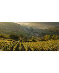 Vinsmagning d. 7. Oktober (Bourgogne/Côtes de Beaune)